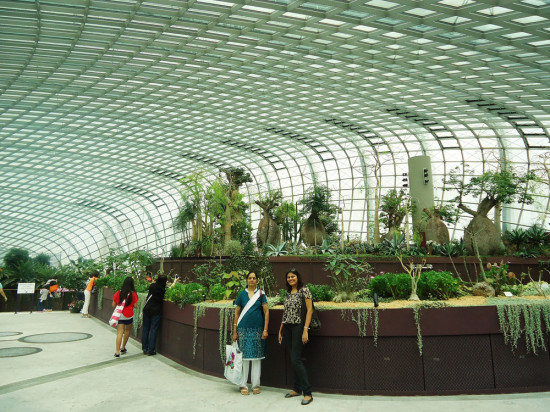 Pic-8 Flower dome