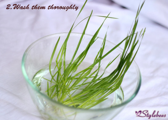 wheat grass for health